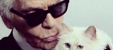 Состояние легендарного Лагерфельда может унаследовать его кошка