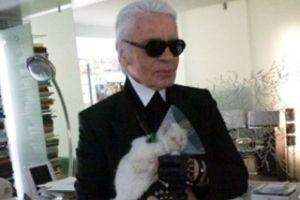 Кошка Лагерфельда становится популярнее дизайнера