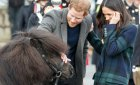 Шотландский пони укусил принца Гарри