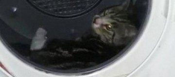 Британца отправили в тюрьму за сушку кошки