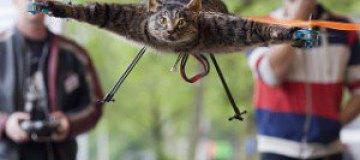 Голландец сделал вертолет из своего мертвого кота
