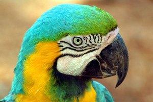 Американец получил полгода тюрьмы за убийство попугая вилкой