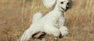 Топ-10 самых популярных в мире собак