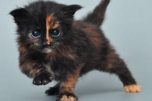 Банк одобрил кредит на котенка