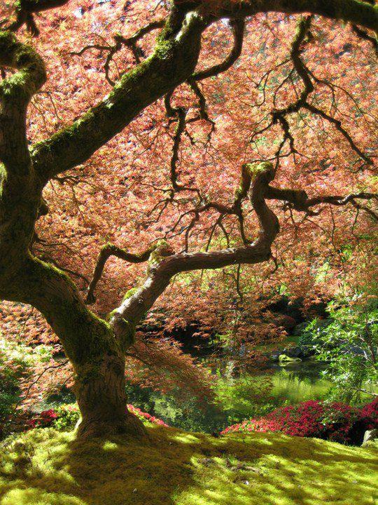 Джереми Рединг, «Японский клен»