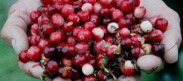 В Швеции сборщики ягод устроили массовую драку