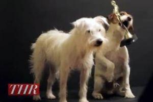 В Голливуде учредили кинопремию для собак