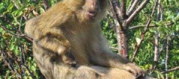 На Донетчине японская макака из зоопарка сбежала в церковь