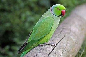 Потерявшийся попугай сообщил полиции свой домашний адрес