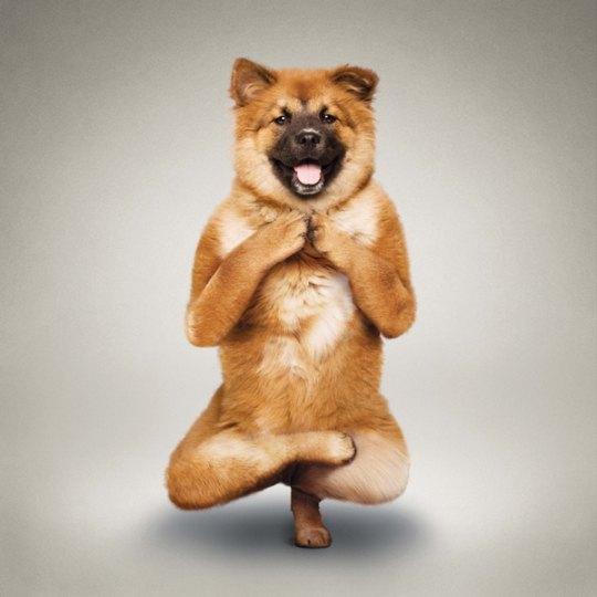 Tadasana - повышает подвижность тазобедренного и коленного суставов