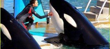 Марион Котийяр занялась приручением китов