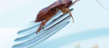 Конкурс по поеданию тараканов закончился смертью победителя