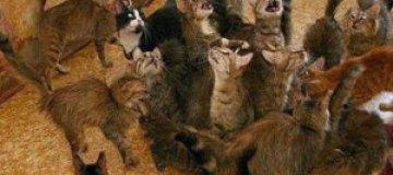 В Израиле пара развелась из-за пяти сотен кошек