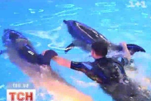 Мельниченко быстро освоил технику плавания с дельфинами