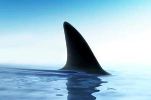Рыбака, дрейфовавшего в океане, спасла акула