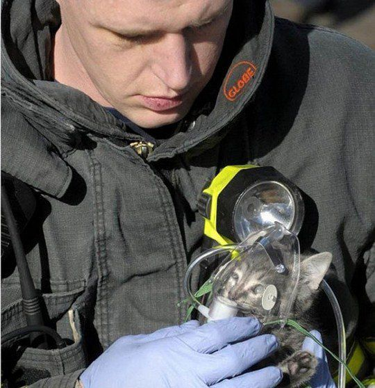 Котенку дают кислород после спасения из дома в Миссуле, штат Монтана