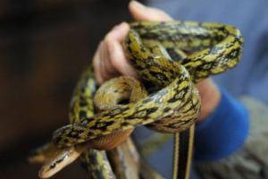 В номере немецкого отеля обнаружили сотню змей