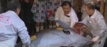В Японии гигантского тунца продали за $750 тыс.