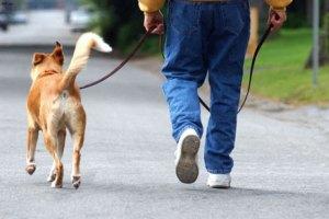 В Петербурге предложили создать партию собаководов