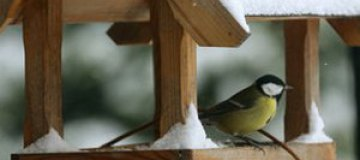 Для московских птиц устроят новогодний банкет