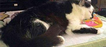 """Злобный кот """"взял в заложники"""" своих хозяев"""
