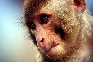 Милиция спасла обезьяну