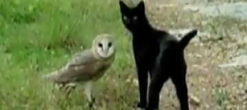 Дружба кошки и совы