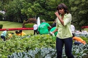 Мишель Обама забросила свой огород из-за бюджетного кризиса