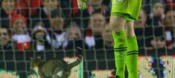 В Англии толстый кот остановил футбольный матч