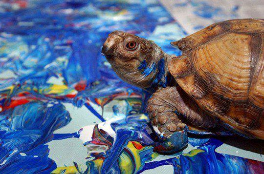 Черепаха Купа