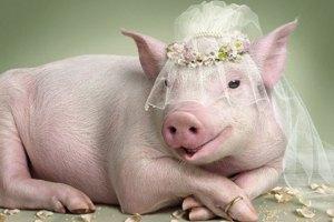 Жених изменил невесте с официанткой прямо на свадьбе