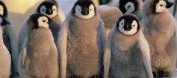Жизнь пингвинов в зоопарке Сан-Диего