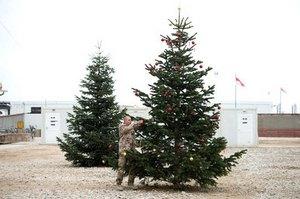 На жителя Омска рухнула новогодняя ель