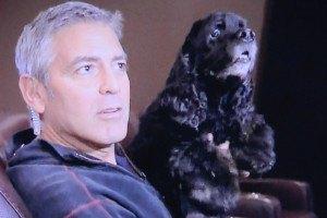 Джордж Клуни на целый день отправил собаку в спа-салон