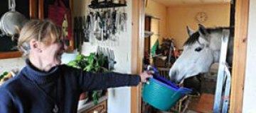 Шотландская пенсионерка поселила дома лошадь
