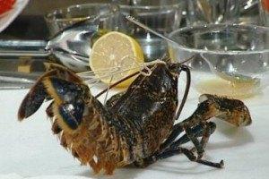 Немецкая пара отпустила на волю заказанных в ресторане омаров