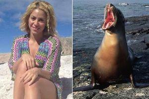 На Шакиру напал морской лев
