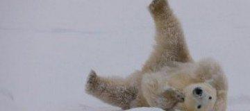 Арктика и Антарктика в объективе Михаэля Полица