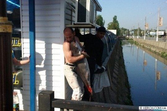 Операция по спасению дельфина