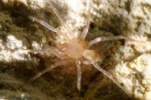 Редкий паук остановил стройку за $15 млн