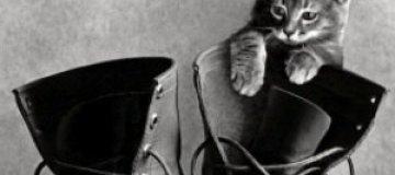 Черно-белые портреты животных