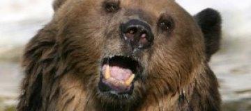 В норвежский дом вломились медведи и выпили сто банок пива