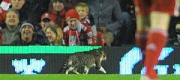 """Установлена """"личность"""" выбежавшего на поле """"Ливерпуля"""" кота"""
