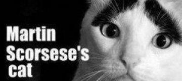 В США проведут кошачий кинофестиваль