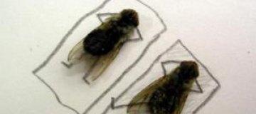 В китайских туалетах разрешили летать только двум мухам