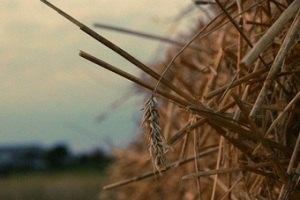Россиянин украл 15 центнеров сена в подарок любимой