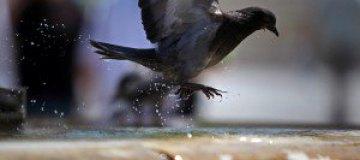 Аргентинский чиновник предложил кормить школьников голубями