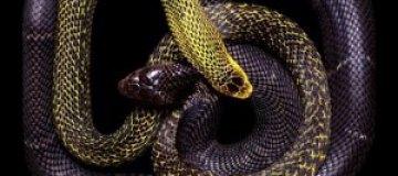 Узоры из змей