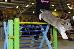 В Швейцарии прошел забег с препятствиями среди кроликов