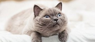 Жительница Нигерии выгнала кота из дома за гомосексуализм